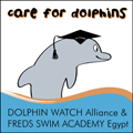 care for dolphins - freds egypt